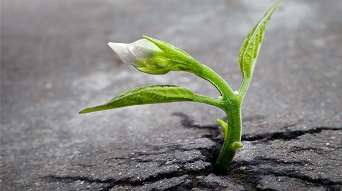 seeds take time to grow. life is a game of change and growth